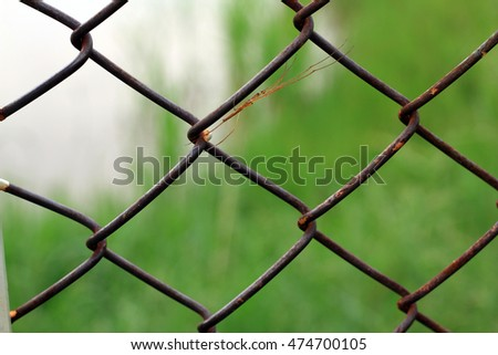 small spider hide at metal fence pattern background texture wallpaper backdrop abstract / new species spider in Laos
