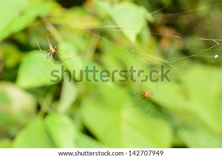 Small Spider in its web with smooth green bokeh background