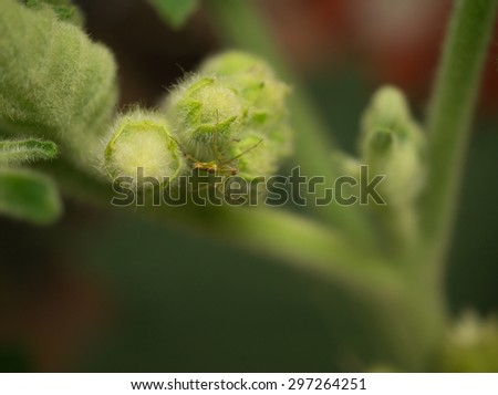 Small spider on plant flower - stock photo