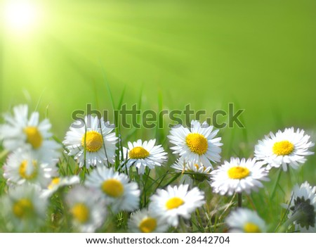 Small spring flowers - stock photo
