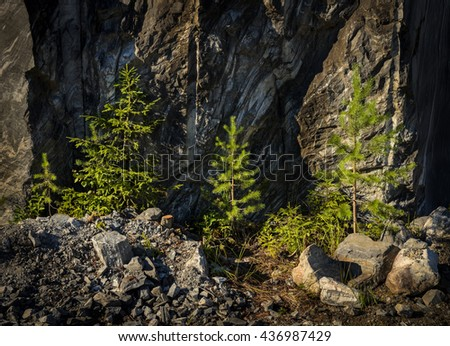 small spruces at the foot of a rocks - stock photo