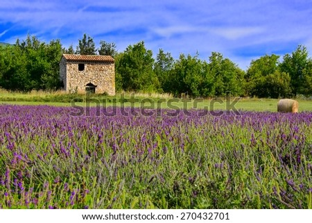 Small stone house among the lavender fields of Provence, France with vibrant blue sky