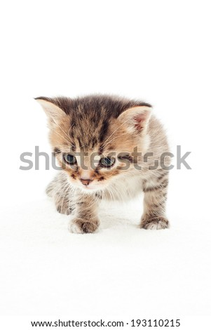 small striped kitten sneaks up on white background