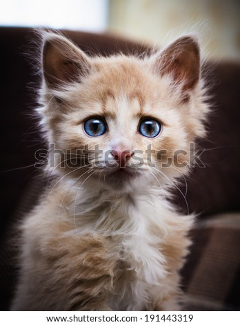 Small surprised kitten looking forward. - stock photo