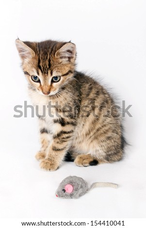 Small tabby kitten playing with a toy mouse - stock photo