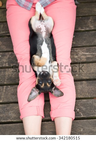 Small Terrier Mix Puppy Relaxing on Woman's Lap On Summer Day - stock photo