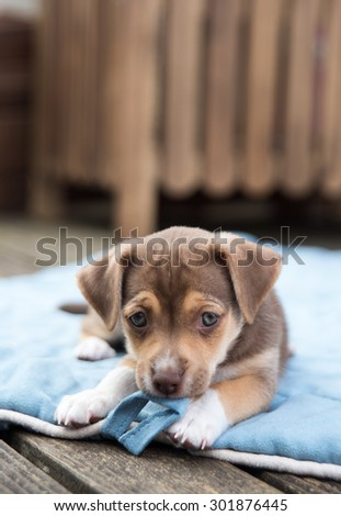 Small Terrier Mix Puppy Relaxing Outside on Blanket