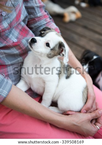 Small Terrier Mix Puppy with Relaxing on Woman's Lap Outside