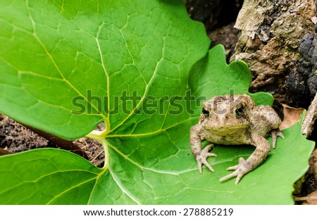 Small toad on a green leaf - stock photo