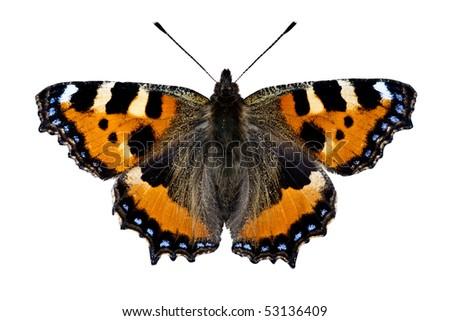 Small Tortoiseshell Butterfly on white - stock photo