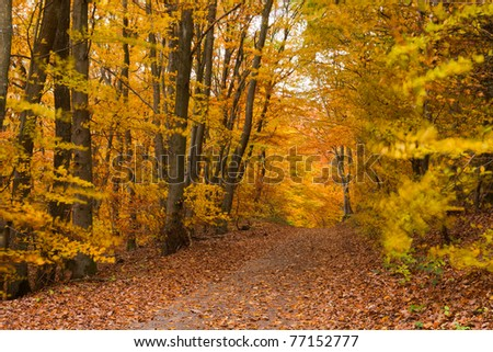 Small trail in golden fall deciduous forest