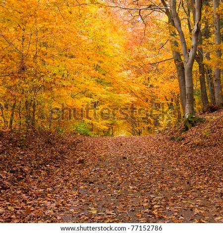 Small trail in golden fall deciduous forest - stock photo