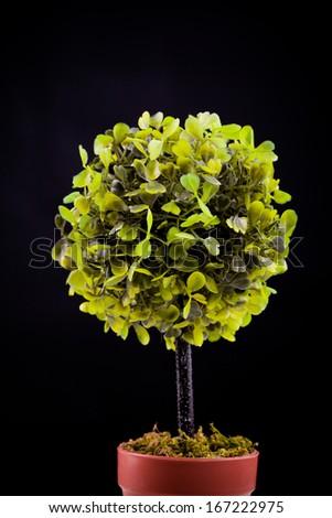 small tree - stock photo
