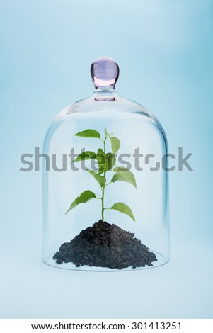 Small tree growing under a glass dome on blue background - stock photo