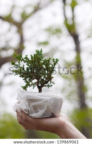 Small Tree Held in Hand with Large Trees as a Backdrop - stock photo