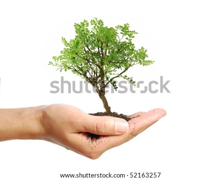 Small tree in a hand - stock photo