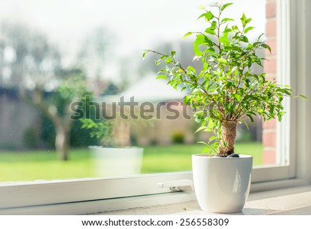 Small tree in a window - stock photo