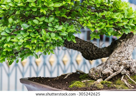 Small tree in garden