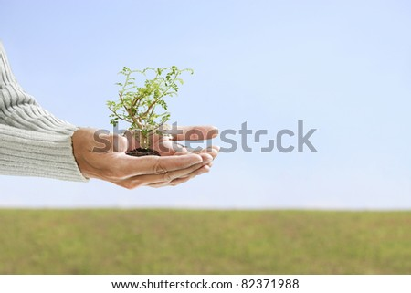 small tree in hand with copy-space - stock photo