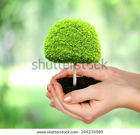 Small tree in hands on nature background