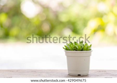 Small tree in white pot decor on garden background - stock photo
