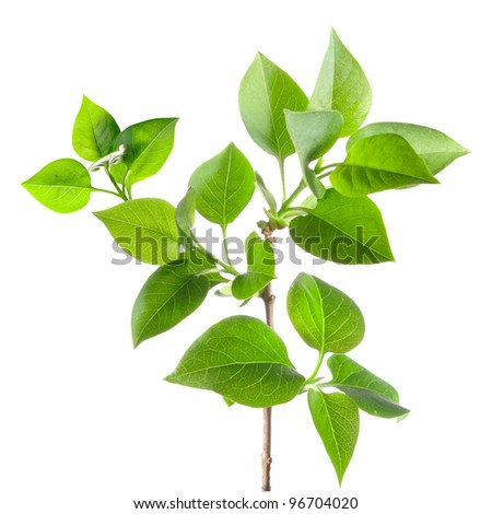 small tree Isolated on white background - stock photo