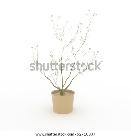 Small tree isolated on white - 3d illustration - stock photo