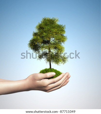 Small tree on hand - stock photo