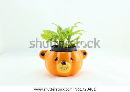 small tree plant in a bear jar on white background