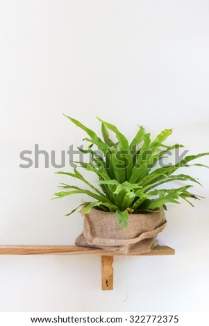 small tree potted plant on wood shelf decorated interior room with white wall - stock photo