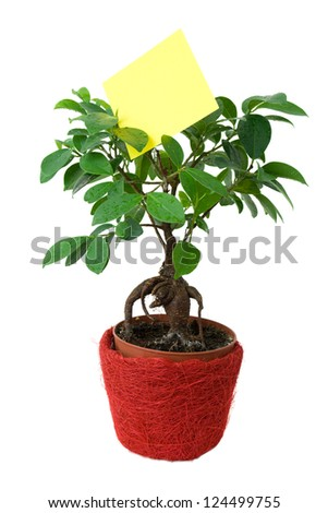 Small Tree with a blank paper - stock photo