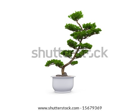small tree with pot on a white background