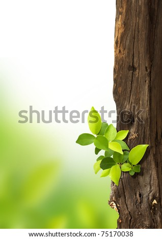 small trees growing on the old timber. - stock photo