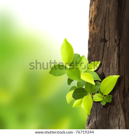 small trees growing on the old timber on green background. - stock photo