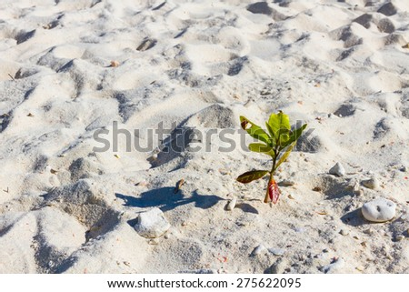 Small trees in the sand - stock photo