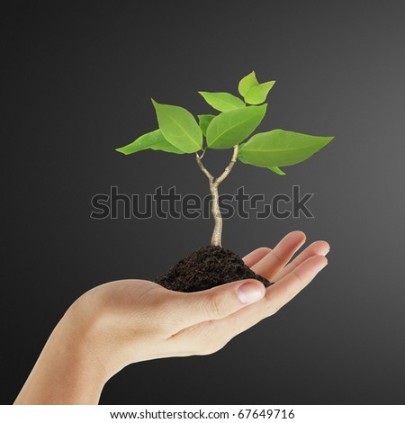 Small trees on hand
