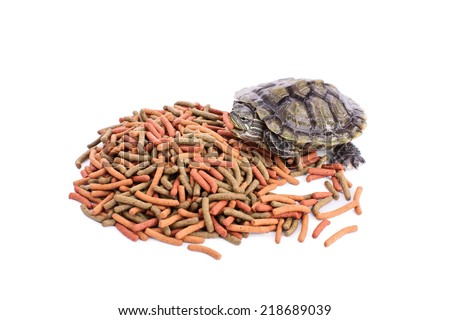 Small turtle on a pile of reptile food holding a chunk of it in its mouth, isolated on white background - stock photo