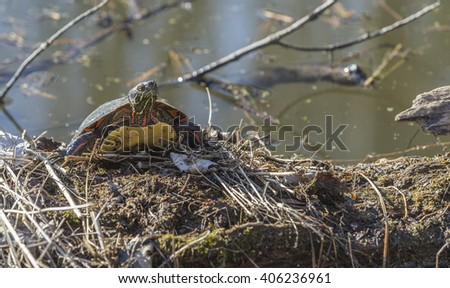 Small turtle resting on a branch
