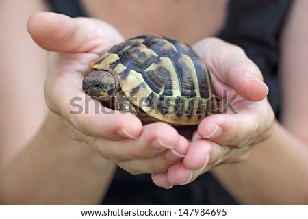 Small turtles, pet in the hands of girls - stock photo
