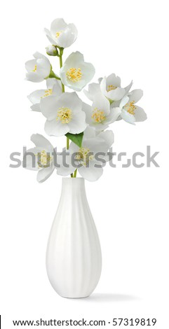 Small vase with jasmin isolated on white - stock photo