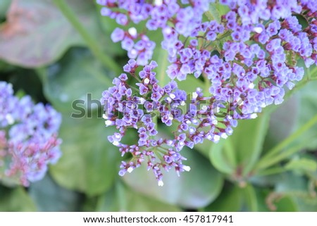 little purple flowers stock images, royaltyfree images  vectors, Beautiful flower