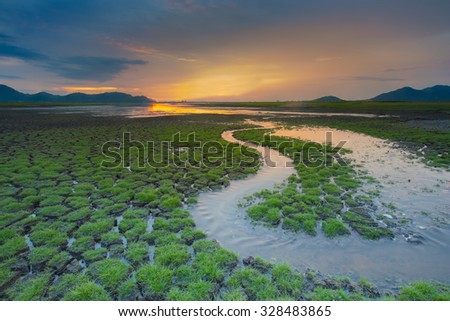 Small water way over green grass cracked land during sunset  - stock photo