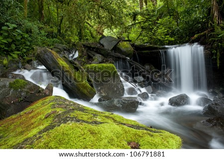 Small waterfall at cloud forest, La Amistad international park, Chiriqui province,Panama,central America - stock photo