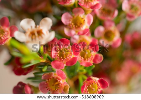 Small white and pink flowers.