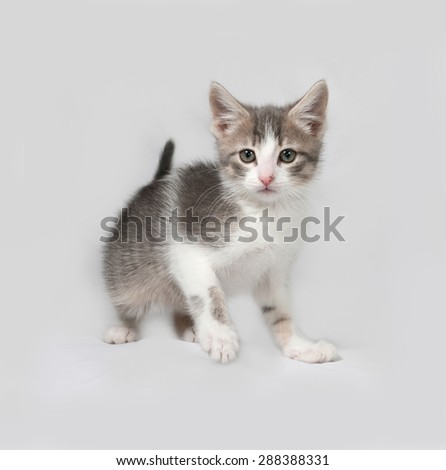 Small white and tabby kitten standing on gray background