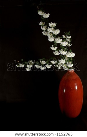 Small white flowers in red vase; isolated on black. - stock photo