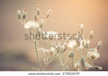 small white flowers in the meadow