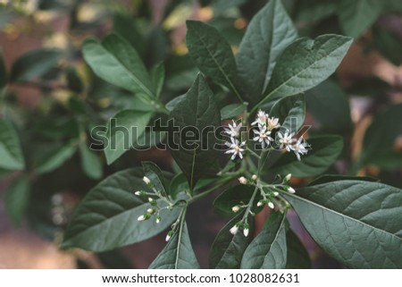Small white flowers on tree dark stock photo safe to use small white flowers on tree with dark green leaves background toned picture mightylinksfo