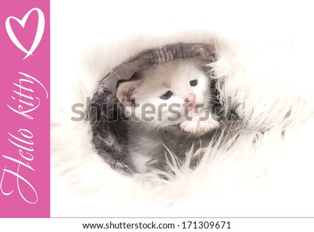 Small white kitten lying on fur, isolated on a white background.
