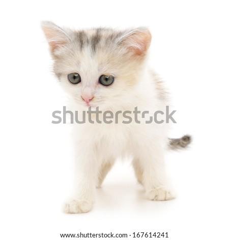Small white kitten on a white background - stock photo